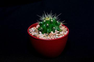 Cactus Isolated on isolated black background