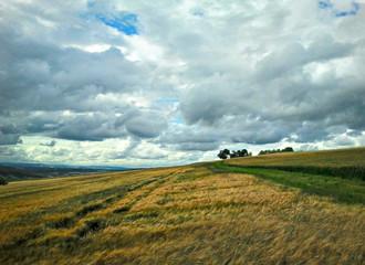 Blick auf ein Feld mit dunklen Regenwolken
