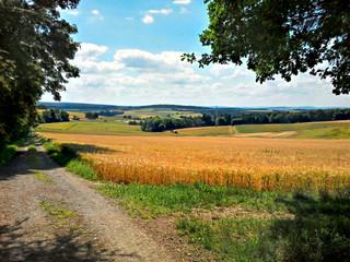 Feldweg mit Getreidefeld und blauem Himmel