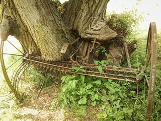 Alter Eisenpflug eingewachsen in einen Baum