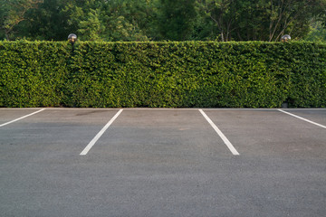 Empty parking lot with foliage wall in the background