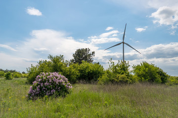 Green field of wheat and wind turbines generating electricity