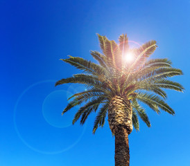 Tropical palm tree in front of bright blue sky