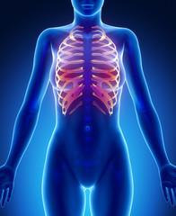 RIBS  blue x--ray bone scan