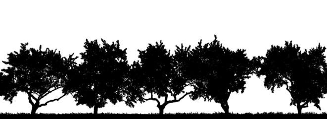 Fotografik einer Obstbaumreihe als Scherenschnitt