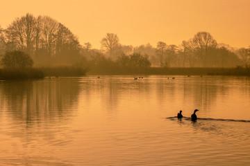 Wall Mural - Reflecting orange morning sun in lake with birds