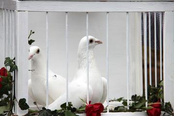 Weiße Tauben im Käfig
