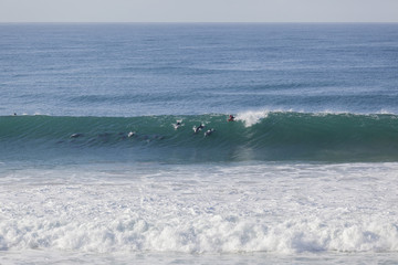 Surfing Dolphins Surfer