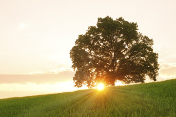 Baum mit Sonnenuntergang