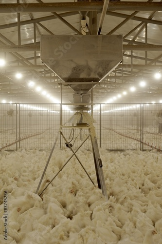 Poultry feeding systems -SPIN FEEDING SYSTEM