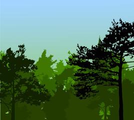dark pines in green forest illustration