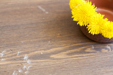 Yellow dandelions in clay pot on a wooden surface
