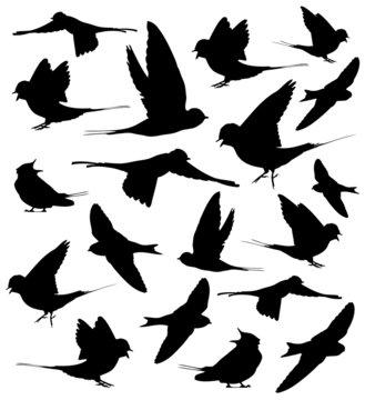 Barn swallow set silhouettes