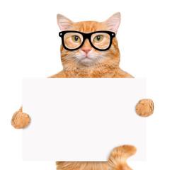 Placeholder banner cat.