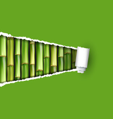 Green bamboo grove with ripped paper frame isolated on white bac