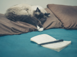Cat in bed with notepad