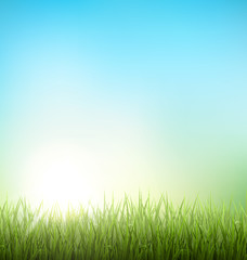 Green grass lawn with sunrise on blue sky. Floral nature spring