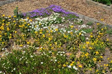Blumenbeet mit Weg aus Rindenmulch