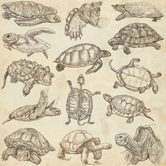 Turtles - Freehands, full sized hand drawings on paper