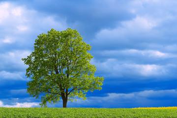 Fototapeta Wiosenne drzewo obraz