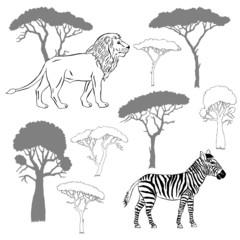 Lion, zebra and savanna trees