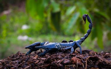 Faithful dangerous scorpions.