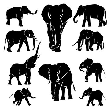 Elephant Silhouette Pack