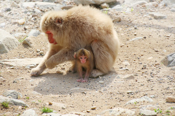 ニホンザルの親子 - Mother and child of Japanese macaque