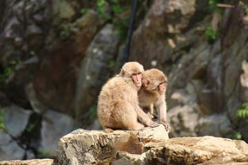 2匹のニホンザルの子供 - Children of Japanese macaque