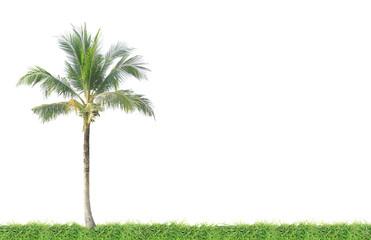 Coconut tree on green grass field
