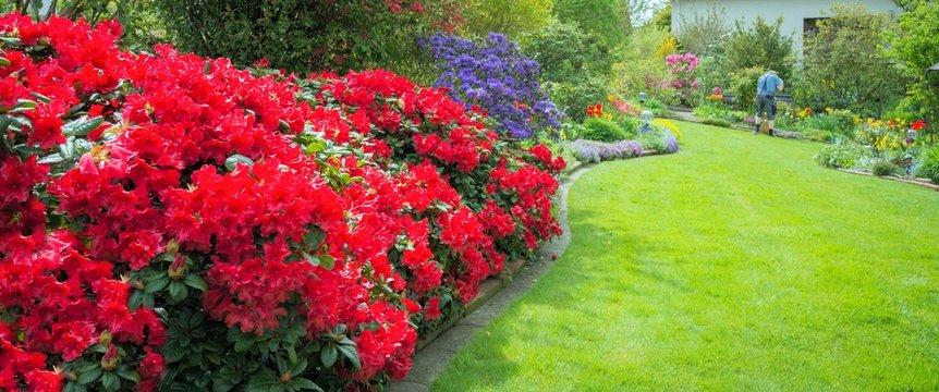 Garten mit roten Azaleen
