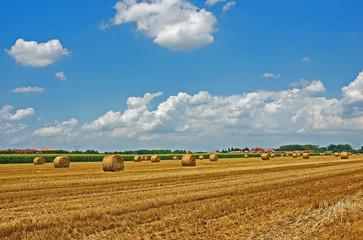 Italy,  Padana plain near Ravenna, wheat grain field. Wall mural