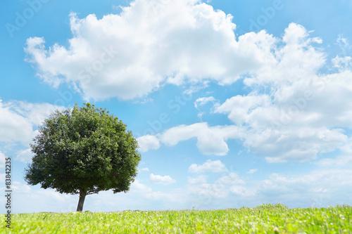 Wall mural 一本木のある草原