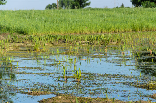 field flooded with damage from water