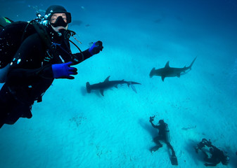 Diver and Great Hammerhead sharks.