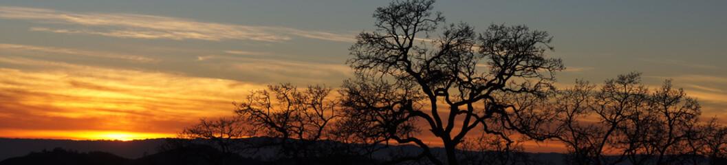 Oak Tree Silhouette Panoramic Sunset. Joseph D. Grant County Park, Santa Clara County, California, USA.