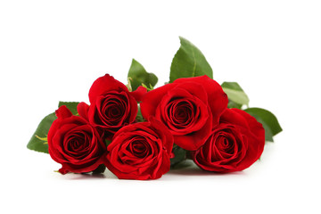 Five fresh red roses on white background