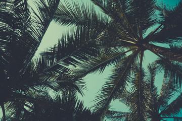 Palm trees from bottom, vintage toned