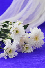 Bouquet of chrysanthemums on a blue background