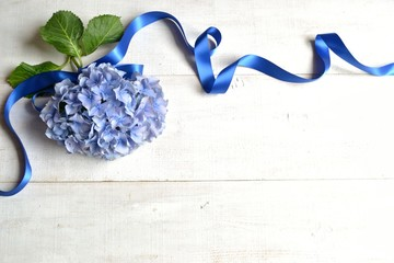 Blue hydrangea with ribbon