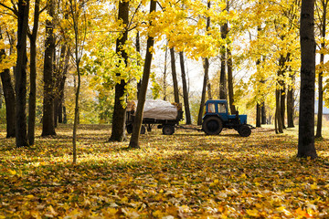 cleaning of foliage in park