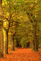 Autumn in the woods with path