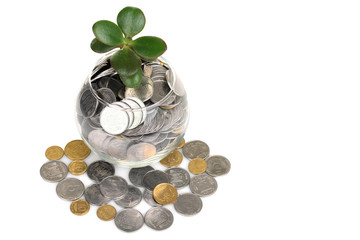 money tree sprout  with coins