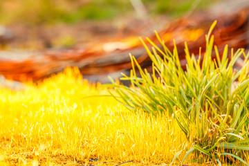 detail yellow moss and green grass