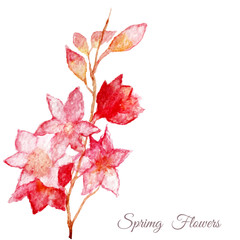 Vector Pink apple tree, sakura, cherry flower. Watercolor hand