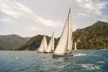 three white sails in a row