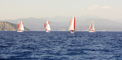 red and white sails on the blue water