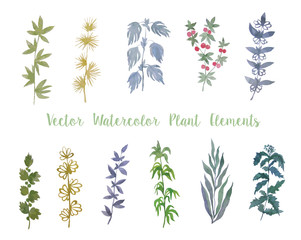 Set of Vector Watercolor Herbs and Berry for Decoration.