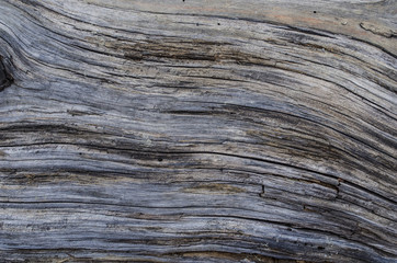 Old grey wood - background