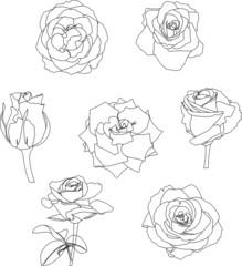 roses contour